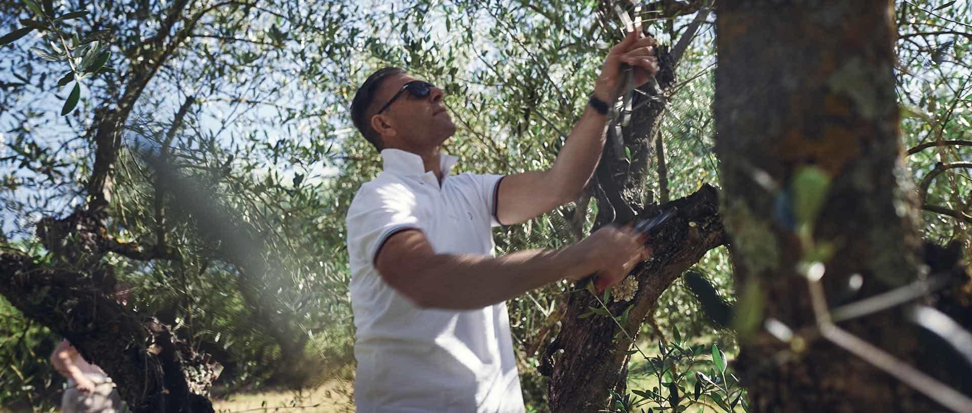 Alles über Olivenöl