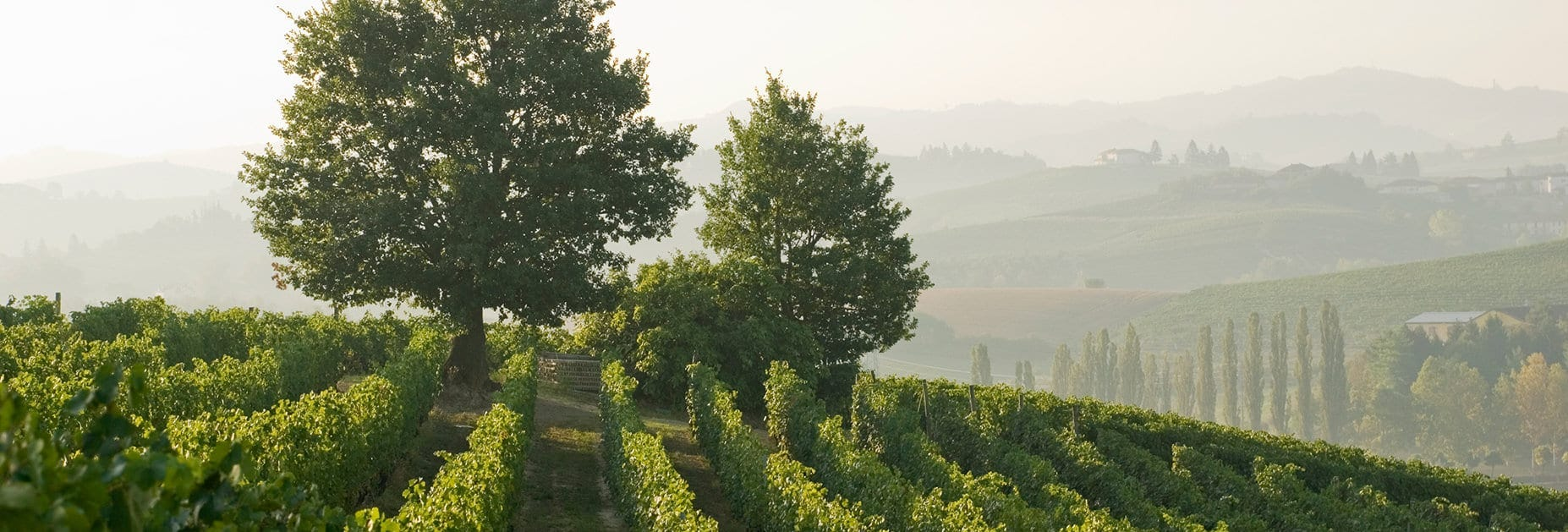 Piemont – Heimat ganz grosser Weine