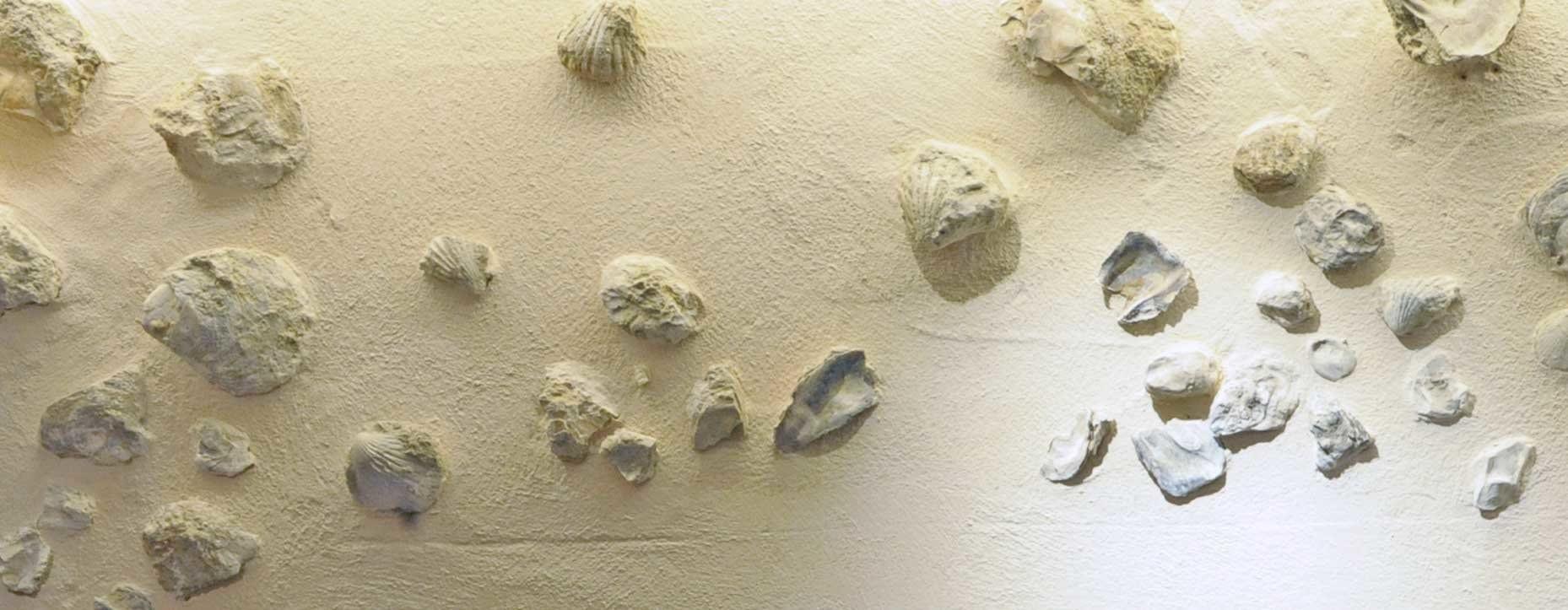 Fossilien im Rebberg